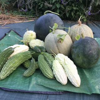 今日はお盆の入りです。畑で収穫された野菜をお供えします。