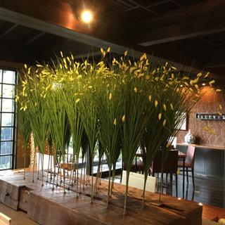 指宿長寿庵でハーブティーが販売開始となりました。